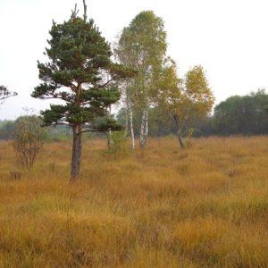 Le Marais du Cassan et de Prentegarde