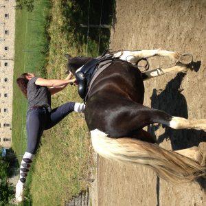 Promenades cheval & poney – Ferme Équestre de Cantalès