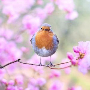 Conférence «Chants d'oiseaux: entre langage et communication » à Maurs