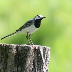 Sortie Nature pour découvrir les oiseaux et les plantes à Laroquebrou