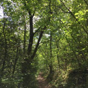 Sentier de Sénergues