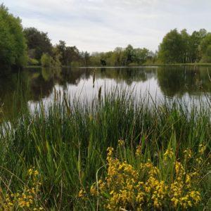 Etang de pêche de Saint Saury