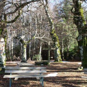 Site des Trois Arbres